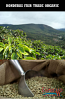 Green Coffee Beans - Honduras Fair Trade Organic 2lb Bag